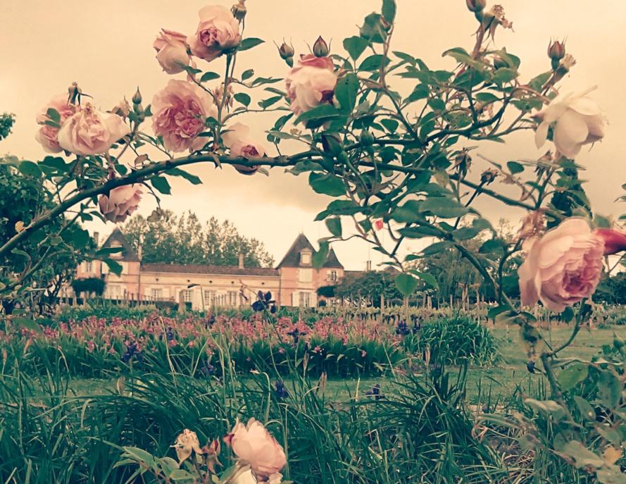 Rendez-vous dans les jardins du Château Loudenne les 5, 6 et 7 juin 2015